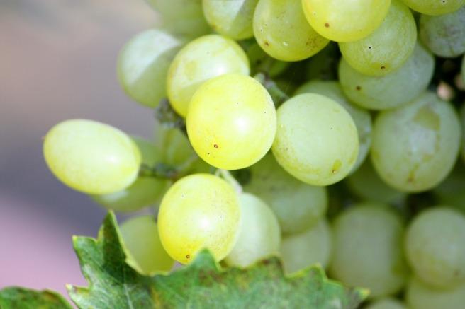 grapes-707590_1920.jpg